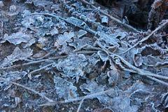 Feuilles congelées d'hiver comme fond Images libres de droits