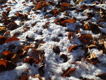 Feuilles congelées dans la neige Image stock