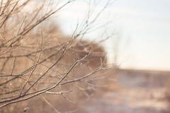 Feuilles congelées et branches glaciales, paysage étonnant d'hiver Image libre de droits