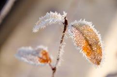 Feuilles congelées près du pont à 116 dans Kirkland Images stock