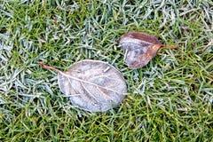 Feuilles congelées sur l'herbe congelée Images stock