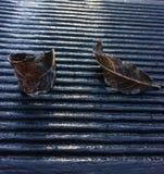Feuilles congelées sur une surface en bois Image stock