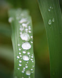 Feuilles couvertes dans des gouttelettes d'eau macro Photographie stock libre de droits