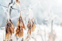 Feuilles couvertes par la neige et la glace un jour d'hiver Images libres de droits