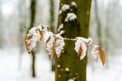Feuilles couvertes par neige dans une forêt Photos stock