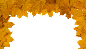 Feuilles d'érable décoratives rouges et jaunes Image stock