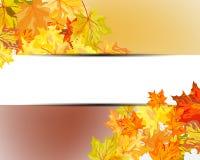 Feuilles d'érable d'automne Image stock