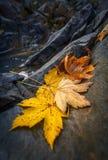 Feuilles d'érable d'automne se reposant sur une roche Image stock