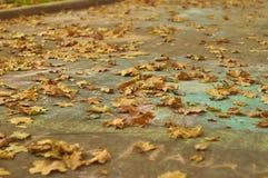 Feuilles d'érable d'automne sur l'asphalte Image stock