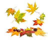 Feuilles d'érable d'automne tombant admirablement vers le bas photographie stock