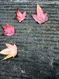 Feuilles d'érable rouge sur la route en pierre photographie stock libre de droits