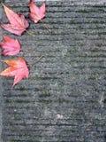 Feuilles d'érable rouge sur la route en pierre photographie stock