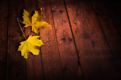 Feuilles d'érable sur le fond brun en bois Photo stock