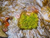 Feuilles d'érable sur les roches moussues dans les courants images stock