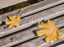 Feuilles d'érable sur un banc en automne Images libres de droits
