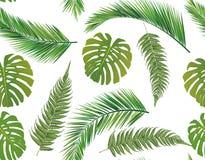 feuilles tropicales de monstera illustration stock image 46116104. Black Bedroom Furniture Sets. Home Design Ideas