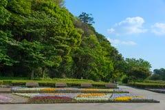 Feuilles d'été en parc Photographie stock libre de droits