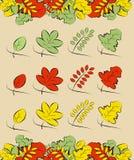 Feuilles d'été et d'automne Images stock