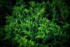 Feuilles d'été et de vert Images stock