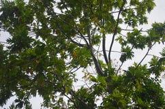 Feuilles d'île tropicale image stock