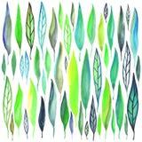 Feuilles d'aquarelle réglées Image stock