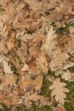 Feuilles d'arbre Photographie stock