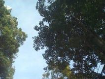 Feuilles d'arbre Photo libre de droits