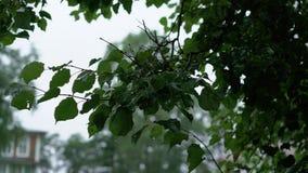 Feuilles d'arbre après pluie clips vidéos