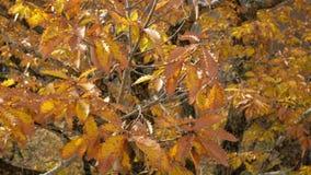 Feuilles d'arbre d'automne soufflant dans le vent clips vidéos