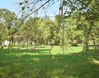 Feuilles d'arbre balayées par le vent de septembre Photo libre de droits