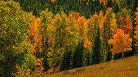 Feuilles d'arbre changeant la couleur Image libre de droits