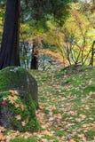 Feuilles d'arbre d'érable japonais l'automne de roches Photos libres de droits