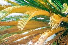 Feuilles d'arbre de bébé de palmier dattier Image stock