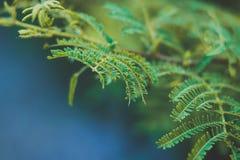 Feuilles d'arbre de fougère avec le fond bleu clair image libre de droits