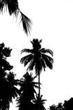 Feuilles d'arbre de noix de coco d'isolement sur le fond blanc Images stock