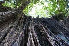 Feuilles d'arbre de ressort Images stock