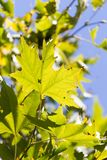 Feuilles d'arbre en nature Photo libre de droits