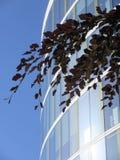 Feuilles d'arbre et l'immeuble de bureaux Images stock
