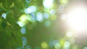 Feuilles d'arbre forestier et de vert rougeoyant au soleil, vidéo de lentille de vintage banque de vidéos