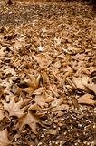 Feuilles d'arbre plat. Photographie stock