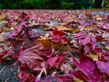 feuilles d'autmn au sol photographie stock