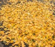 Feuilles d'automne Photographie stock libre de droits