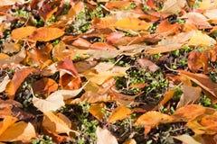 Feuilles d'automne Image stock