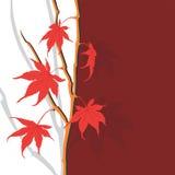 Feuilles d'automne Photos libres de droits