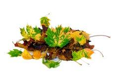 Feuilles d'automne 2 Images stock