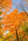 Feuilles d'automne images stock