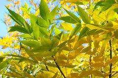 Feuilles d'automne Photos stock