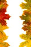 Feuilles d'automne Photographie stock