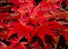 Feuilles d'automne. Photos stock