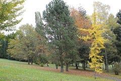 Feuilles d'automne Photo stock